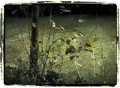 20071114190740-rio-huerva-2.jpg