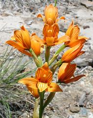 20080119185755-orquidea.jpg