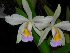 20081101231205-orquideas.jpg