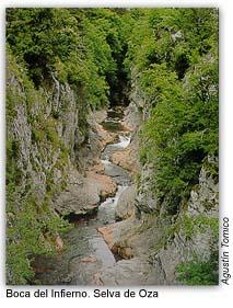 20060731130245-selva-de-oza.jpg