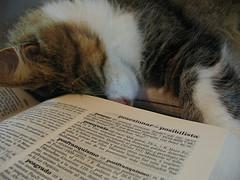 20071214215917-diccionarios.jpg