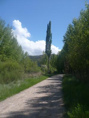 20080525123624-chopo-solitario-a-orillas-del-guadalope.jpg
