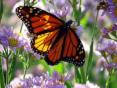 20090318190419-mariposas-2.jpg
