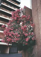 20090319191106-primavera-en-la-ciudad.jpg