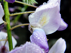 20090408213052-lluvia-primaveral.jpg