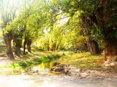 20111122230138-aliaga-otono-2008-6.jpg